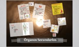 Organos Secundarios