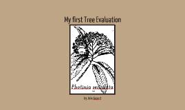Tree Evaluation Report