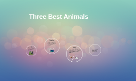 Three Best Animals