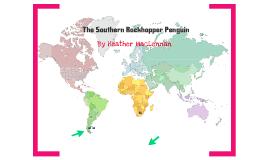 The Rock Hopper Penguin