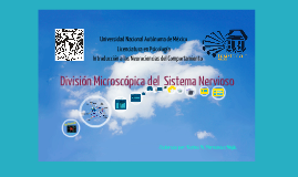 División microscópica del sistema nervioso
