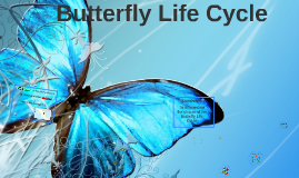Copy of Butterfly Life Cycle