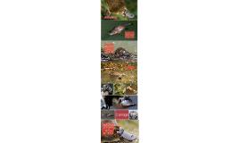 Defying Evolution: The Duck-Billed Platypus