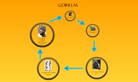 Copy of Gorillas