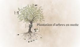Plantation d'arbres en motte.