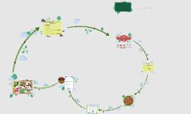 Projektprüfung Jg. 9 künstliches Biotop