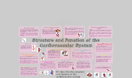 Copy of Copy of Copy of Copy of structure and function of the cardiovascular system