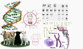 iGCSE Genetics revision