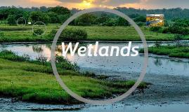 Copy of Wetlands