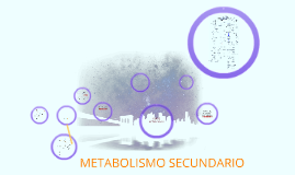 Copy of METABOLITOS SECUNDARIOS