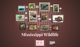 Mississippi Wildlife