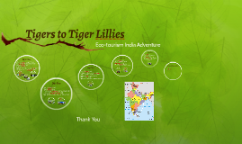 Tigers to Tiger Lillies