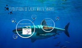Evolution of Great White Sharks