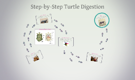 Copy of Step-by-Step Turtle Digestion