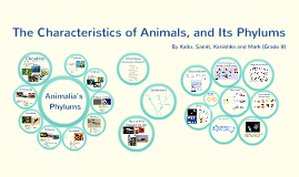 The Characteristics of Animals, and Its Phylums [NO WORD]