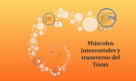 Músculos intercostales y transverso del Tórax