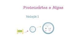 Protozoarios e algas bio 1