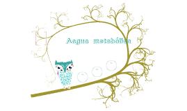 Aagua  metabólica