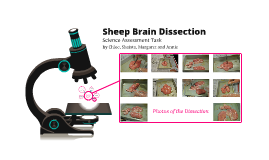 Sheep Brain Dissection | Science