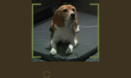 Copy of The Beagle