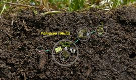 Copy of Poluarea cu Pesticide