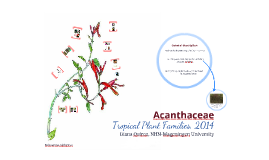 Copy of Acanthaceae 2013