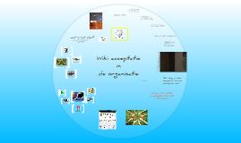 Wiki acceptatie in de organisatie
