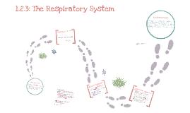 GCSE PE Respiratory System