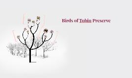 Birds of Tobin Preserve