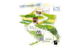 Prezentacja Biologia- cykl rozwojowy  żaby