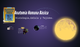 Anatomía Humana Básica