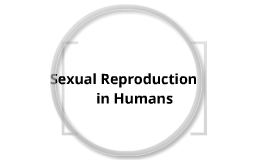 Biology Revision: Sexual Reproduction in Humans