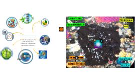 Theme Enjeux planétaires contemporains par Coralie ULYSSE lycée JB de la SALLE