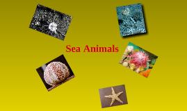 Copy of Sea Animals