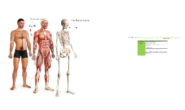 Copy of Skeletal System - GCSE
