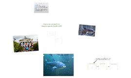 Copy of Invasive Species: ASAIN CARP