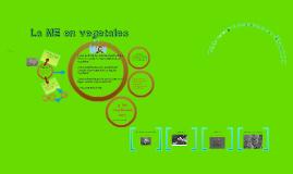 Tips para procesar vegetales para Microscopía Electrónica