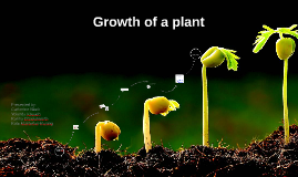 Growth of a plant