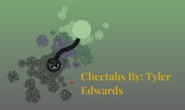 Cheetahs By: Tyler Edwards