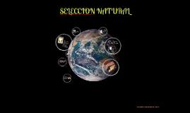 Copy of SELECCION NATURAL