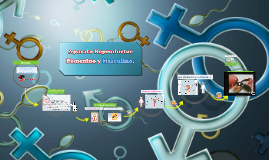 Copy of Aparatos Reproductor Femenino y Masculino