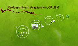 Photosynthesis, Respiration, Oh My!