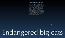 Endangered Big cats