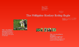 The philippine Monkey Eating Eagle