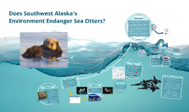 Does Alaska's Environment endanger Sea Otters?