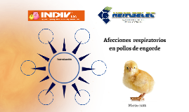 Afecciones  respiratorios en pollos de engorde