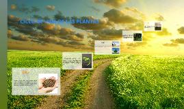 Copy of Copy of CICLO DE VIDA DE LAS PLANTAS