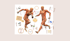 Copy of AQA GCSE PE Muscular System