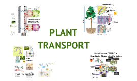 Bio - Plant Transport
