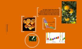 Copy of Oranges!!!